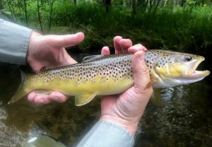 River Report - Pere Marquette River Lodge